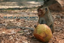 The fate of a coconut monkey…